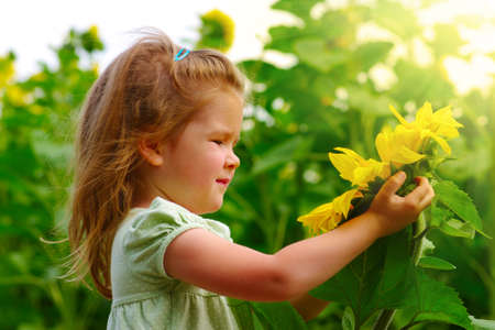 girl in the sunflowers field
