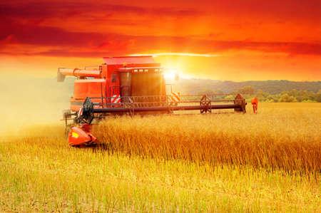 Combinar trabajando en el campo. cosechas Harvester Foto de archivo - 78963555