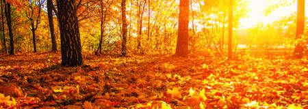herfst bomen op zon in park Stockfoto