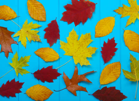 autumn leaves on wooden blue background