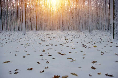 snowdrifts: Sunset in winter forest Stock Photo