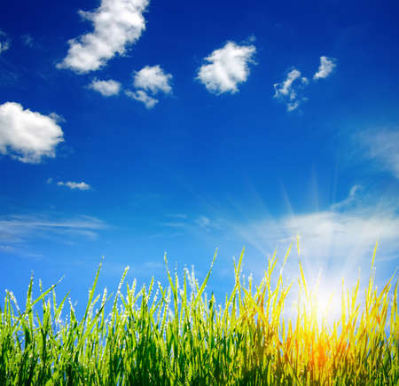Green grass on clouds