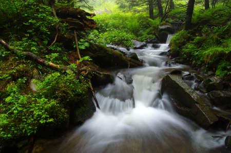 Creek in the woods and trees in the fog Banque d'images