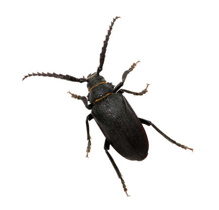 black beetle isolated on white Banque d'images