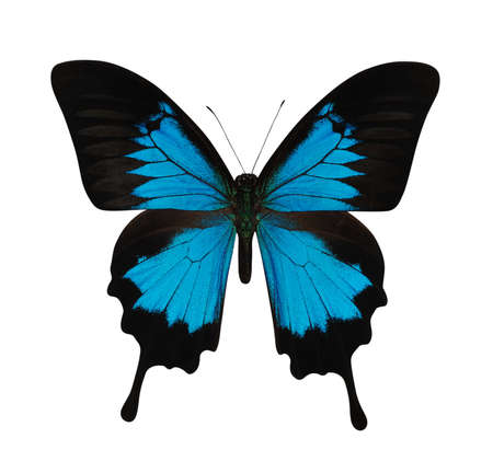 Blue butterfly isolated on white background Stock fotó