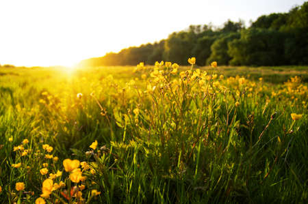 field of spring flowers and sunlight Banque d'images