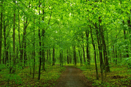 Green forest and the path Banque d'images