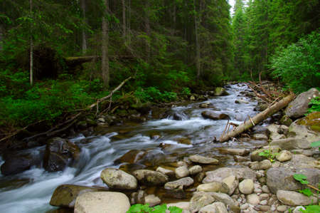 Mountain river flowing through the green forest. Stream in the wood. Banque d'images