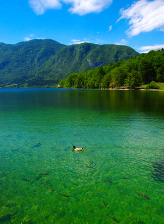 Mountain lake with clear water Imagens