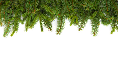 Fir tree branch isolated on white background 写真素材