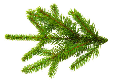 Fir branch isolated on white background 写真素材
