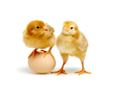 brown egg and chicks isolated on a white background Banque d'images - 120345065