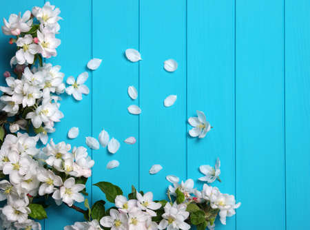 Spring blossom on blue wood background. Top view, flat lay. Banque d'images - 120345066