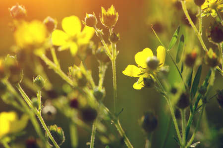 Spring flowers on sun. Nature background Banque d'images - 120345067