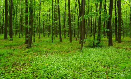 Forest trees. nature green wood in spring Banque d'images - 120345069
