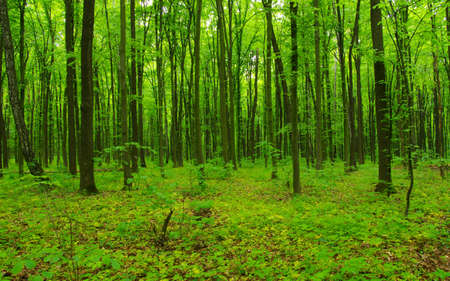 Beautiful green forest in spring Banque d'images - 120345071
