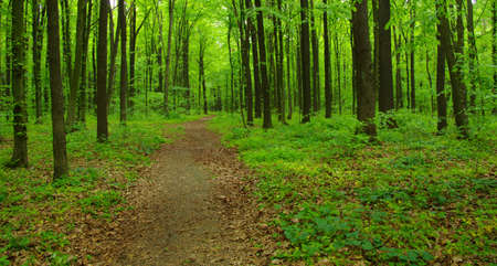 Forest trees. nature green wood in spring Banque d'images - 120345073