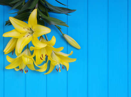Fresh spring lily flowers on turquoise painted wooden planks Banque d'images - 120345076