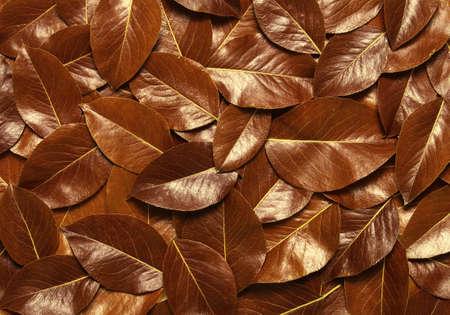 Leaf texture. Nature concept Banque d'images - 120345118
