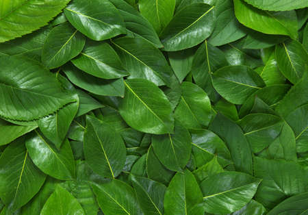 Creative layout made of green leaves. Flat lay. Nature concept Banque d'images - 120345121