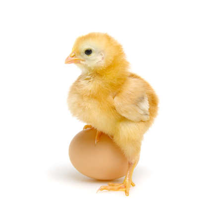 egg and chicken isolated on a white Banque d'images - 120345193