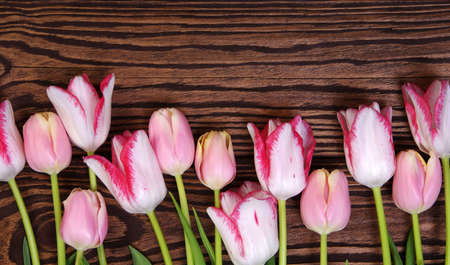 Beautiful pink tulips on wood background Banque d'images - 120345201