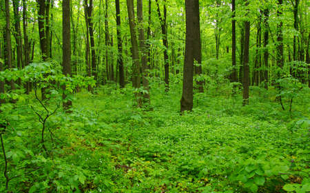 Forest trees. nature green wood in spring Banque d'images - 120345227