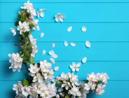 Spring blossom on blue wood background. Top view, flat lay. Banque d'images - 120345242