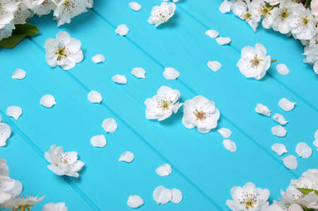Spring blossom on blue wood background. Top view, flat lay. Banque d'images - 120345244