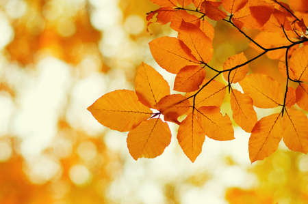 Autumn leaves on blurred nature background. Shallow focus. Fall bokeh. Stok Fotoğraf - 129813620