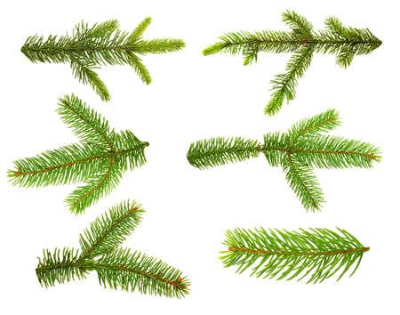 Satz Tannenzweige. Weihnachtsbaum, Kiefer, Winter.