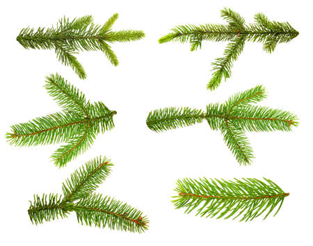 Set van spar takken. Kerstboom, dennen, winter.