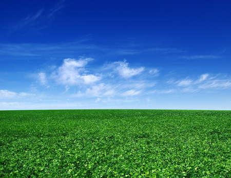 campo verde y cielo azul con nubes