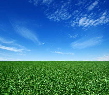 grünes Feld und blauer Himmel mit Wolken