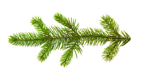 Fir branch isolated on white background