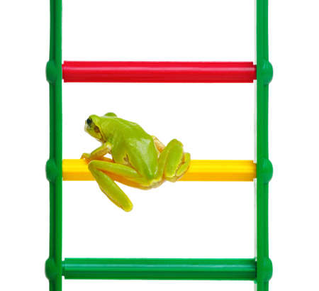 Green frog on the toy ladder