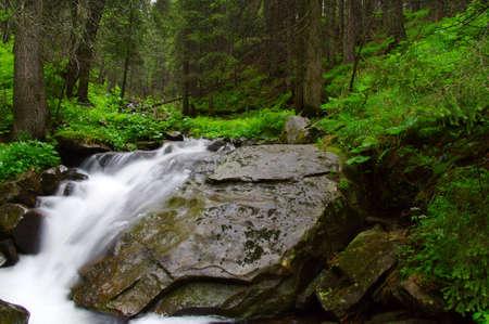 Fluss im Wald und Bäume im Nebel