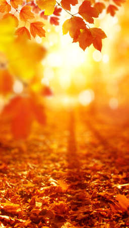 Autumn leaves on the sun. Fall blurred background. Stock fotó - 155444995