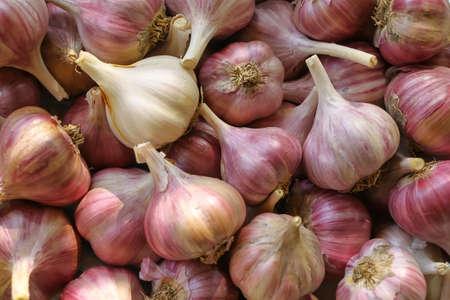 Heads of garlic in bulk close up