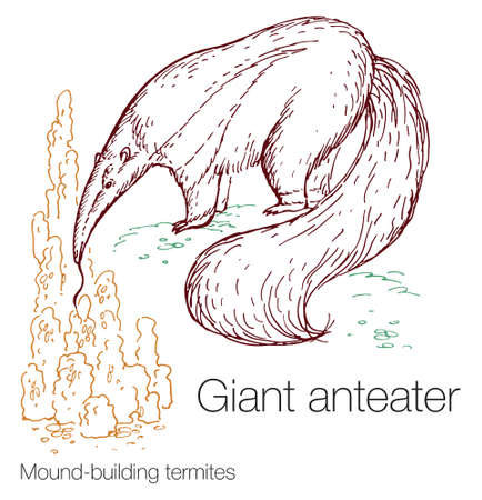 Giant anteater and mound-building termites hand drawn vector illustration