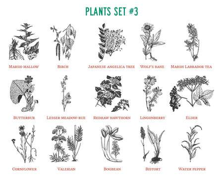 Vector hand drawn plants set