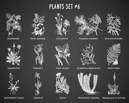 Vector hand drawn plants set on black background