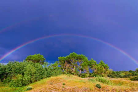 beautiful colourful rainbow over the green trees