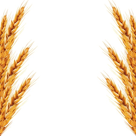 white background with ears of wheat on it Stock Photo