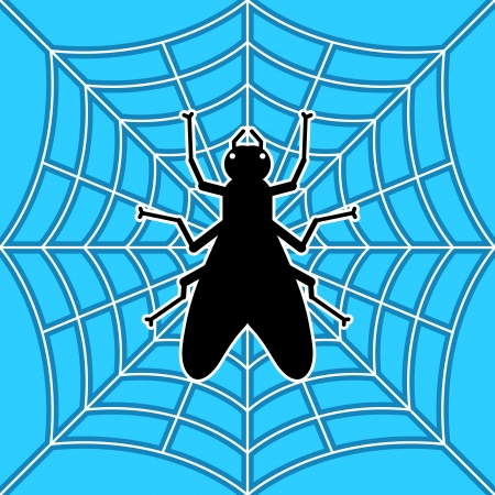 image of black fly in spider Stock Vector - 16402546
