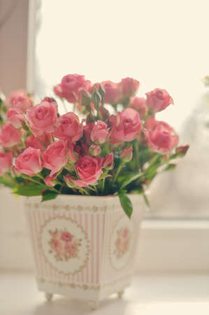 Bouquet of scarlet roses in a pot on a window sill early in the morning Stock Photo