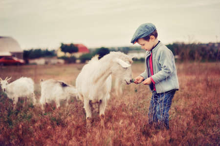 the boy in a cap in the field grazes goats Stock Photo