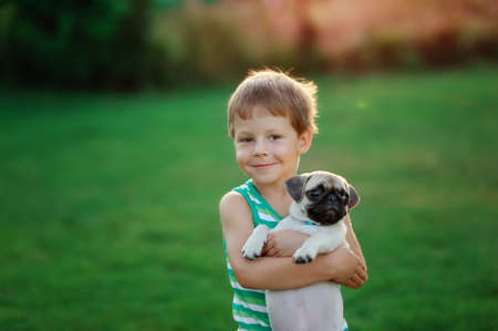 on a lawn play the child with a puppy of a pug Standard-Bild