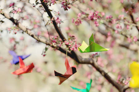 in the spring on branches of a blossoming tree paper cranes hang photo
