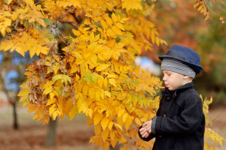 the boy in the autumn wood in a hat and a coat among trees Stock Photo - 14795218